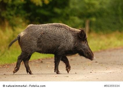 Schweinerei in der Greizer Neustadt